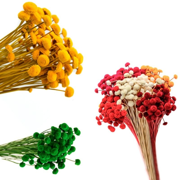Botao Aterciopelado, ramillete de flores naturales