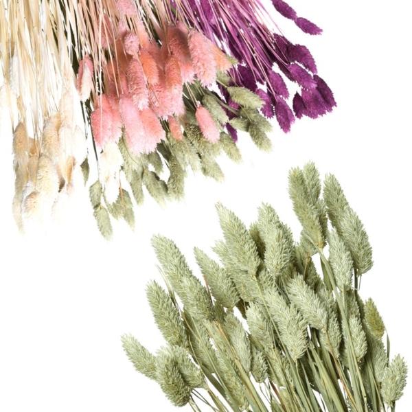 Phalaris Preservada, ramo elaborado con esta flor