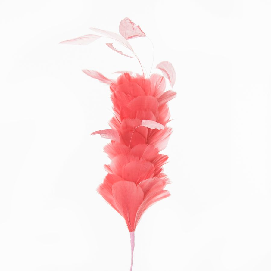 075-CORAL